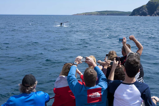 avalon-whale-breach.jpg - Visitors take photos of a whale surfacing off the coast of Avalon Peninsula in Newfoundland.