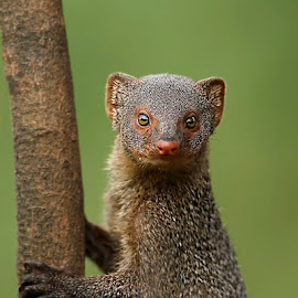 mongoose by Sathya Vagale - Uncategorized All Uncategorized