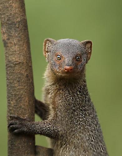 mongoose by Sathya Vagale - Uncategorized All Uncategorized