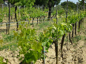 Photo: Visiting a family vineyard producing high quality Brunello of Montacino
