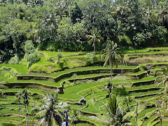 Bali et ses cultures