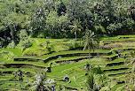 Cultures de Bali