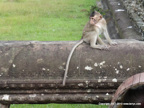 Photo: The monkeys are attracted by the garbage.