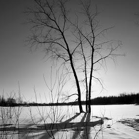 Snow Against the Light by Jean Photo-Vigneault - Landscapes Weather