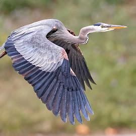 Bird 98870 by Raphael RaCcoon - Animals Birds