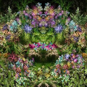 PW 6 Vines x-sym of Random Duality - 1104150678 02-17-19 PZ collage Pix.jpg