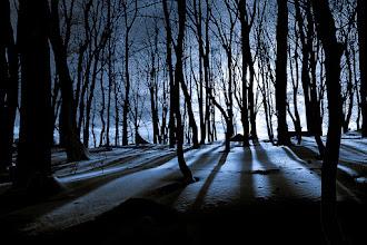Photo: Nighty winter forest  #winter #forest #nightphotography #snow