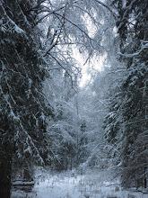 Photo: Зимняя сказка