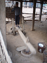Photo: Pounding rice to remove husks - An hour's work every morning for each household