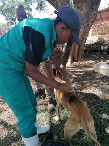 The NWU animal health hospital offers vaccination services to the local communities.