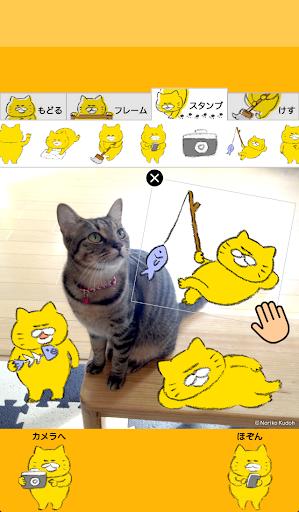 Stray Cats Camera screenshot 3
