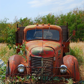 International by Jessica Simmons - Transportation Other ( wheat, farm, truck, antique, abandoned,  )