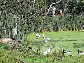 Photo: Puur Natuur in Noord-Brabant