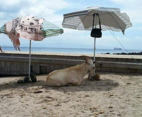 Beata... Sotto l'ombrellone