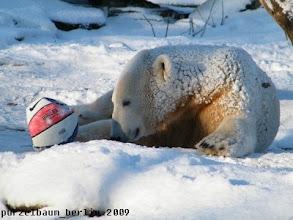 Photo: Hm, eine Runde Ballspiel vielleicht ?