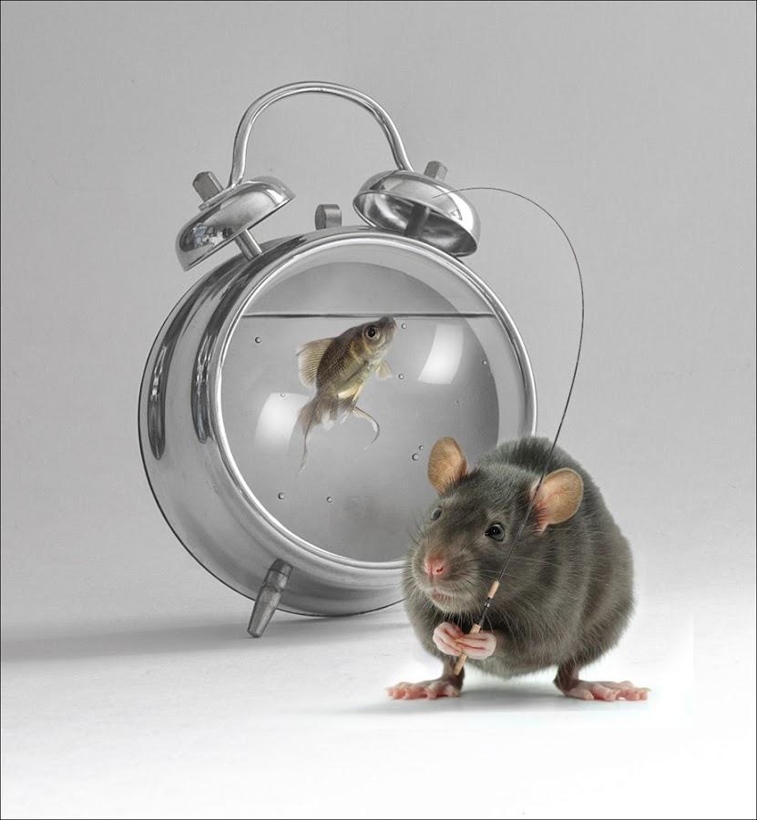 Gone Fishing by Clint Newsham - Digital Art Things ( clock, fish, rat )