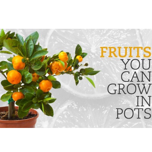 Fruit Trees In Pots 遊戲 App LOGO-硬是要APP