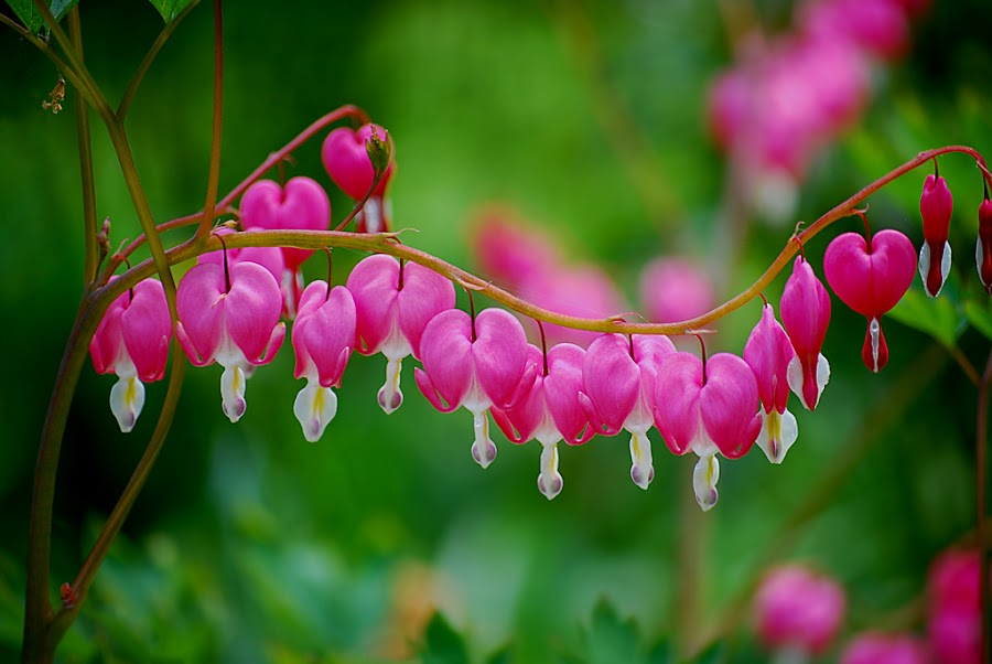 by Sue Hammye - Nature Up Close Flowers - 2011-2013