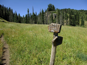 Photo: Trail signs in a meadow - this one looks to be a favorite perch