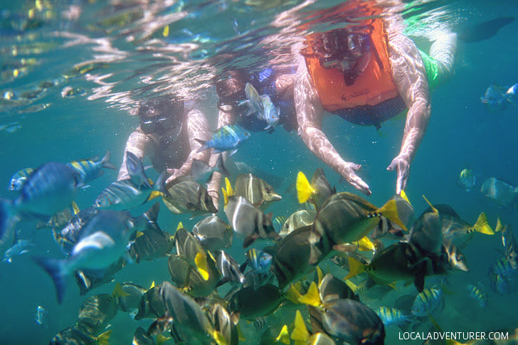 Snorkeling in Cabo San Lucas Mexico.