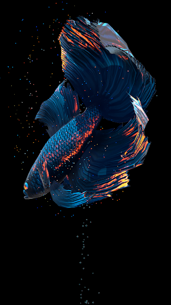 Betta Fish Live Wallpaper Screenshot Image
