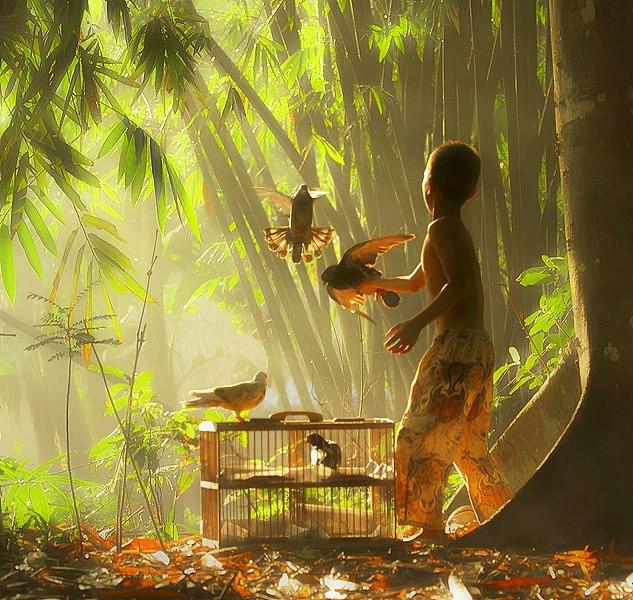 merpati by Rudy Tafsir - Animals Birds