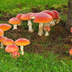 by Loreen Parkerson - Nature Up Close Mushrooms & Fungi
