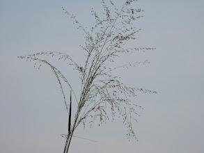 Photo: arjunamma
