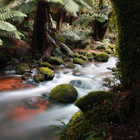 Russell Falls by Chris Romano - Landscapes Forests ( tasmania )