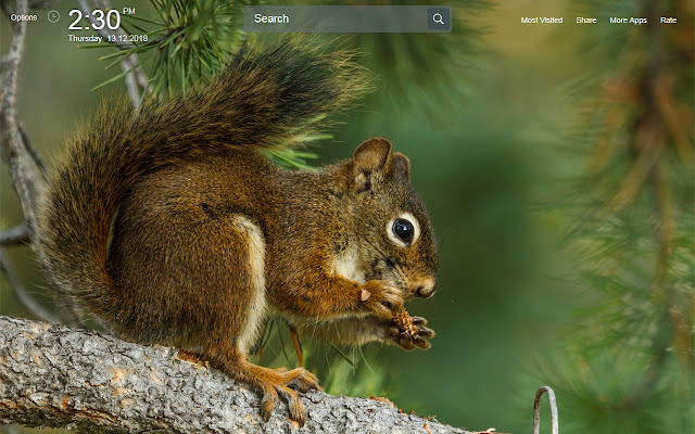Squirrel Wallpapers Theme New Tab
