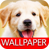 Wallpaper Dog Collection