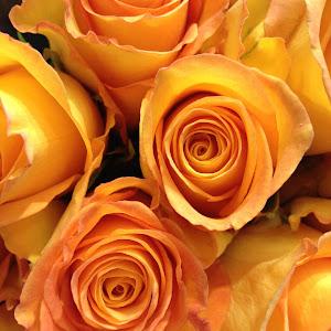 Orange Rose Bouquet.jpg