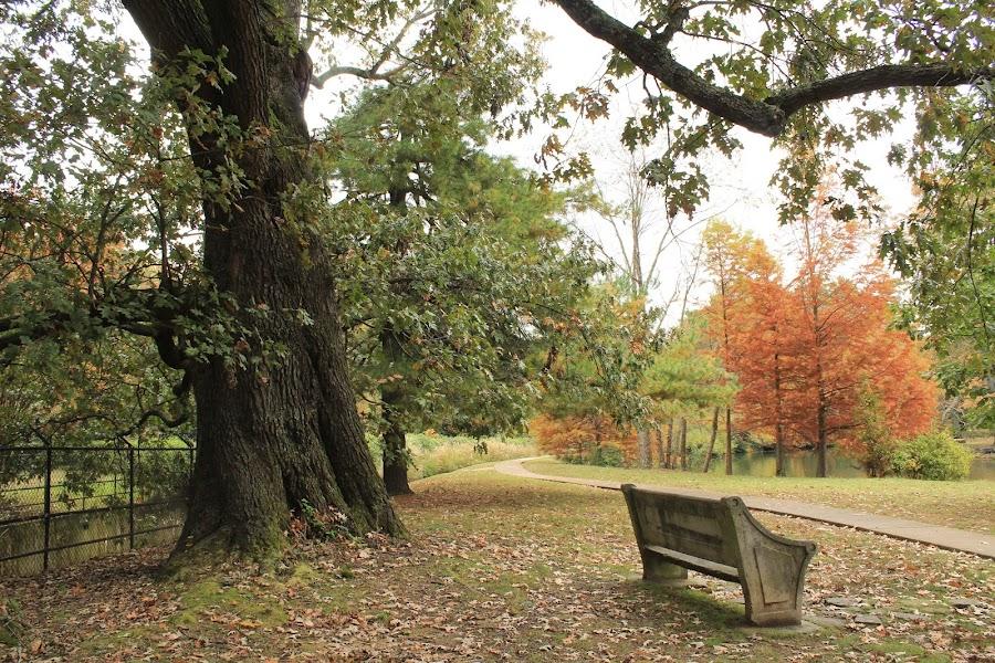 by Paul Hopkins - City,  Street & Park  City Parks (  )