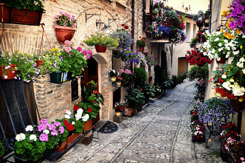 Spello cittadella dei fiori di NinoZx21