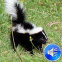 Skunk Sounds Ringtones icon