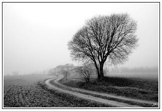 Photo: Misty morning  #plusphotoextract  by +Jarek Klimek #monochrome  #mistymorning