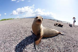Photo: Galapagos sea lion on beach in the Galapagos Islands, Ecuador.