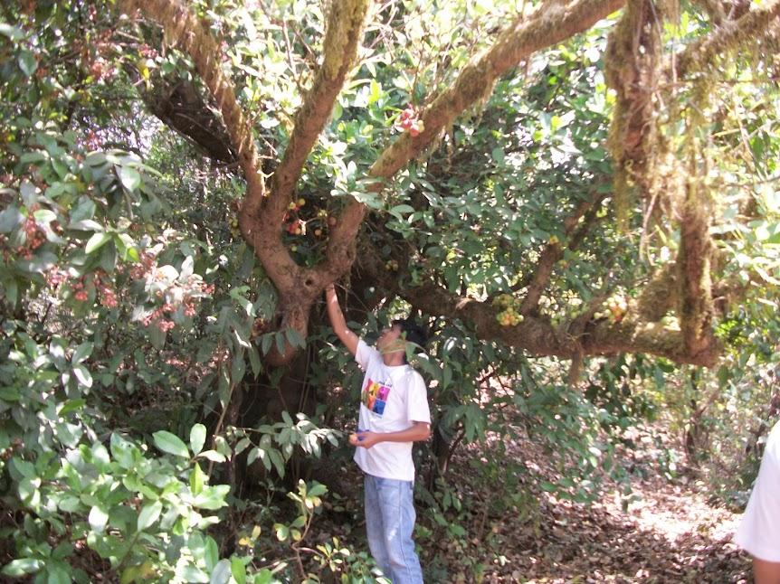 जंगली जांभूळ, पेरूची झाडे, औदुंबर अशा जंगली फळांचा आस्वाद घ्यायला मिळाला.