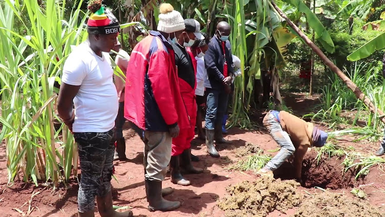A resident digs out cow dung that had been used to bury the body of 55-year-old Anthony Macharia in his farm in Kabati, Murang'a.