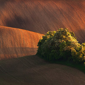 Treasure Island by Jozef Micic - Landscapes Prairies, Meadows & Fields ( field, rolling, waves, lines, landscape, spring )