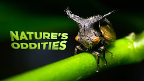 Nature's Oddities thumbnail