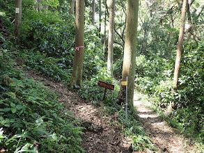 ここから本格的な登山道に(左へ)