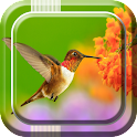 Birds Live Wallpaper icon