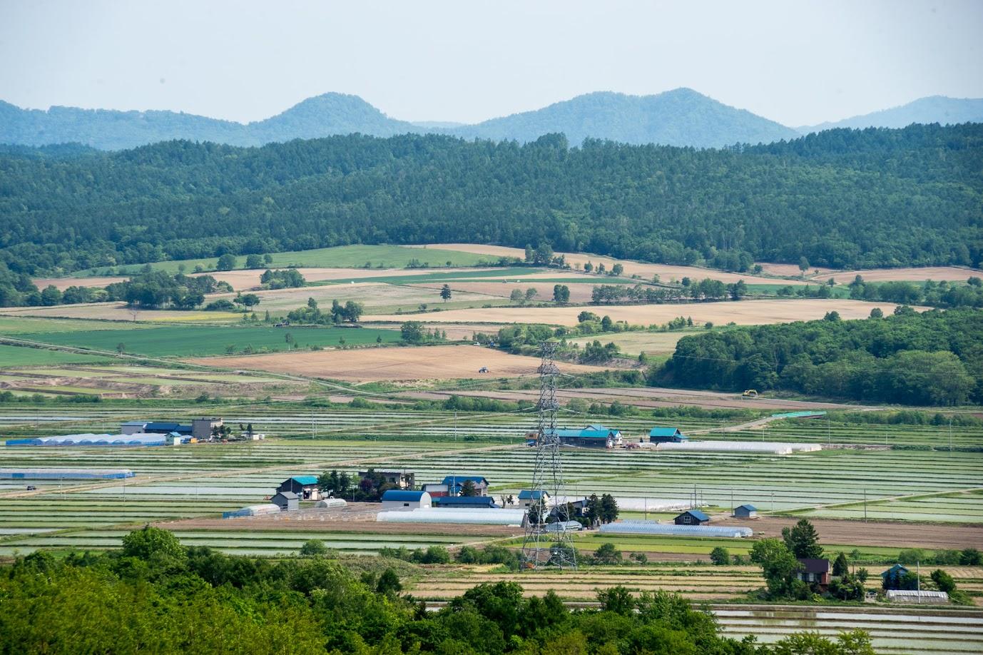 緑に染まる北竜町の田んぼ