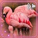 Flamingo Birds Live Wallpaper icon