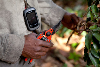 Photo: The trackers use a combination of traditional knowledge and modern technology to keep track of the gorillas' movements