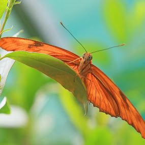 Butterfly species by Lauren Manzano - Animals Insects & Spiders