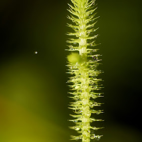 by Barita Mabbiritta - Nature Up Close Other Natural Objects