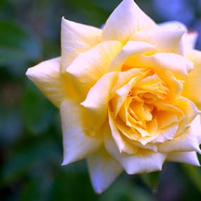 by Jignashu Parikh - Nature Up Close Flowers - 2011-2013