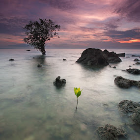 young and old by Rodrigo Layug - Landscapes Waterscapes ( nature, waterscape, sunrise, landscape )